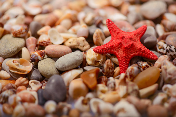 Summertime romance. Image of sea star on the pebble sea shore
